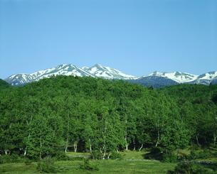 乗鞍高原 新緑の白樺 乗鞍連峰と残雪の写真素材 [FYI04669036]