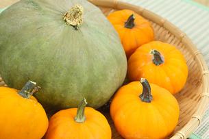 緑とオレンジ色のかぼちゃの写真素材 [FYI04669105]