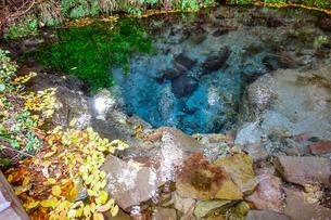 紅葉シーズンの九重連山東麓、黒岳原生林で湧く男池湧水群の写真素材 [FYI04669106]