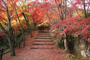 京都の紅葉 勝持寺 紅い絨毯敷き詰めての写真素材 [FYI04669220]