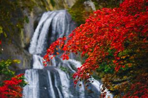 紅葉と滝の写真素材 [FYI04669291]