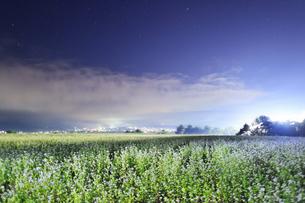 東山観光農園の蕎麦畑のライトアップの写真素材 [FYI04669295]