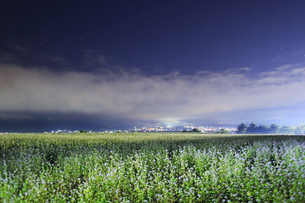 東山観光農園の蕎麦畑のライトアップの写真素材 [FYI04669296]