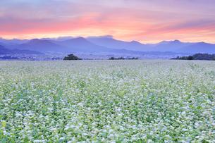 東山観光農園の蕎麦畑と夕焼けの写真素材 [FYI04669297]