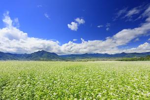 東山観光農園の蕎麦畑と独鈷山などの里山の写真素材 [FYI04669298]