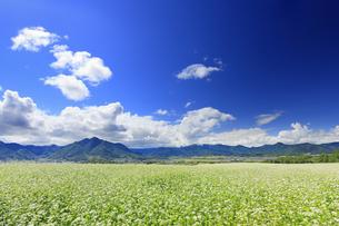 東山観光農園の蕎麦畑と独鈷山などの里山の写真素材 [FYI04669299]