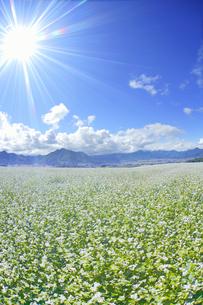 東山観光農園の蕎麦畑と独鈷山などの里山と光の写真素材 [FYI04669300]