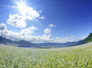 東山観光農園の蕎麦畑と独鈷山などの里山と光の写真素材 [FYI04669301]