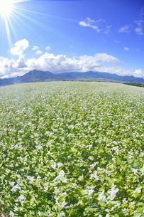 東山観光農園の蕎麦畑と独鈷山などの里山と光の写真素材 [FYI04669302]