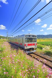 五加のコスモスと別所線の1000系電車の写真素材 [FYI04669383]