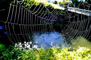 クモの巣の写真素材 [FYI04669389]