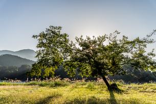 朝日を浴びる河原の草木 静岡県島田市川根町の写真素材 [FYI04669431]