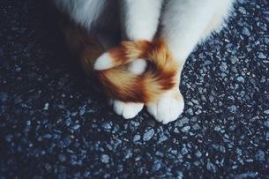 猫のしっぽの写真素材 [FYI04669567]