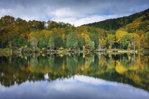 Colors in Autumnの写真素材 [FYI04669838]