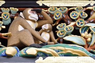 神厩舎 猿の彫刻04の写真素材 [FYI04669864]