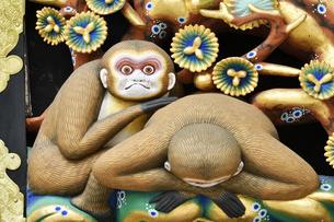 神厩舎 猿の彫刻21の写真素材 [FYI04669881]