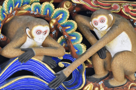 神厩舎 猿の彫刻27の写真素材 [FYI04669887]