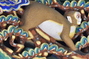 神厩舎 猿の彫刻29の写真素材 [FYI04669889]