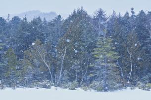 乗鞍高原雪景色の写真素材 [FYI04670097]
