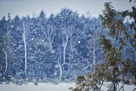 乗鞍高原雪景色の写真素材 [FYI04670098]