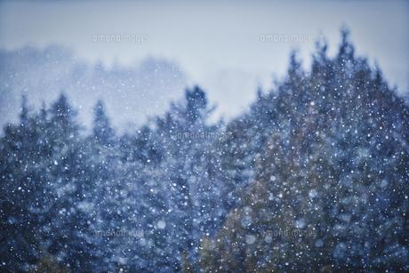 乗鞍高原雪景色の写真素材 [FYI04670099]