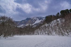 裏磐梯 ダケカンバの木の写真素材 [FYI04670106]
