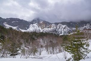 裏磐梯 ダケカンバの木の写真素材 [FYI04670111]