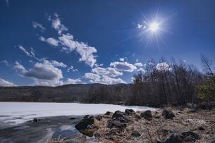 八千穂高原 白樺林の写真素材 [FYI04670123]