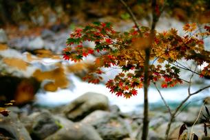紅葉と川の写真素材 [FYI04670157]