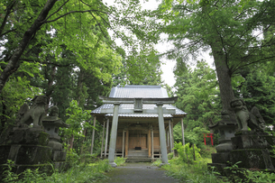 諏訪神社の写真素材 [FYI04670250]