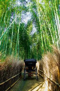 京都 嵯峨野 「竹林の小径」を進む人力車の写真素材 [FYI04670783]