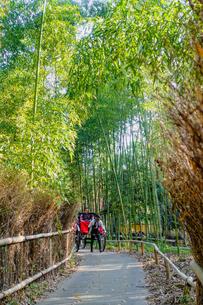 京都 嵯峨野 「竹林の小径」を進む人力車の写真素材 [FYI04670784]