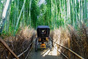 京都 嵯峨野 「竹林の小径」を進む人力車の写真素材 [FYI04670785]