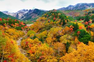 十勝岳温泉の紅葉の写真素材 [FYI04670897]