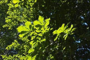 木の葉のイメージの写真素材 [FYI04670913]