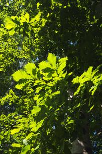 木の葉のイメージの写真素材 [FYI04670914]