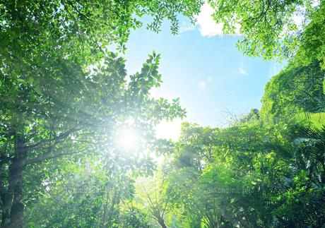 森林と太陽の写真素材 [FYI04671022]