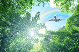 森林と飛行機の写真素材 [FYI04671023]