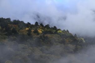 秋霧の朝の写真素材 [FYI04671084]