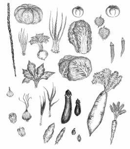 野菜のイラスト素材 [FYI04671207]