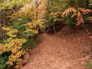 【秋】地面に紅葉した楓が落ちた森の山道の様子 自然風景の写真素材 [FYI04671326]