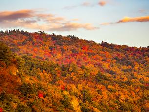 【香川県 小豆島】秋の夕方の寒霞渓 紅葉の写真素材 [FYI04671327]