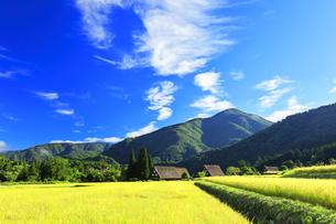 世界文化遺産 秋の白川郷合掌造り集落の写真素材 [FYI04671386]