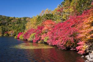 紅葉と白駒池の写真素材 [FYI04671447]