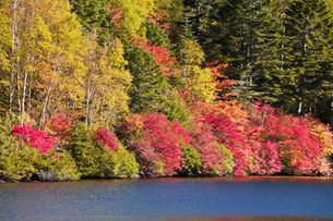 紅葉と白駒池の写真素材 [FYI04671448]