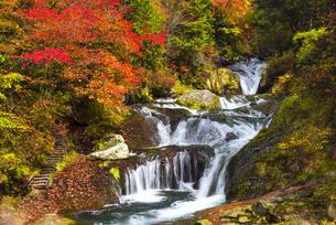 紅葉とおしどり隠しの滝の写真素材 [FYI04671449]