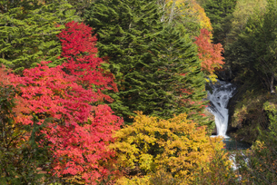 紅葉とおしどり隠しの滝の写真素材 [FYI04671454]