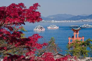 宮島から望む大鳥居の写真素材 [FYI04671462]