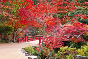宮島紅葉谷公園の写真素材 [FYI04671463]