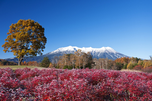 紅葉と御嶽山の写真素材 [FYI04671464]